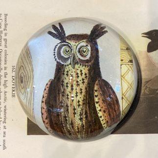 owl paperweight Derian